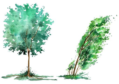 Illustration - tree watercolor isolated on a white background. Figure binary elements. Wind, apple, oak, maple, poplar in the summer season.