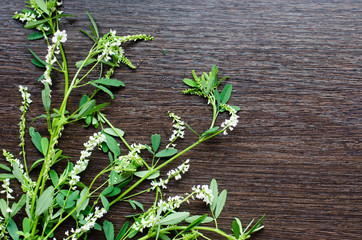 herbal knotweed  on a dark wooden background