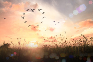 International migrants day concept: Bird flying in heart shape over meadow autumn sunrise background