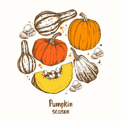 Pumpkin season. Different varieties of pumpkins.