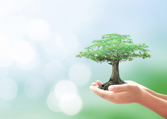 World environment day concept: Human hands holding big tree over blurred green nature background