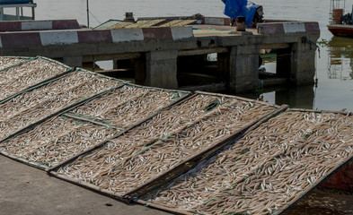Small salted fish dried under the sunlight Danang, Vietnam 2016