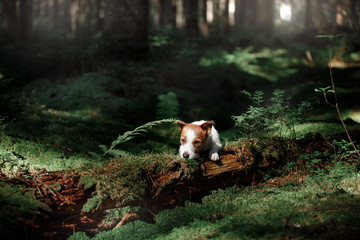 Dog in the forest moss