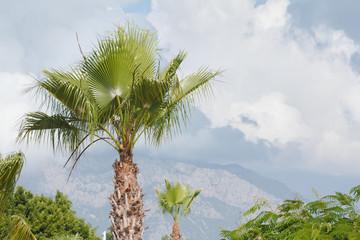 Palm tree on sky