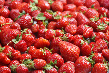 Deluxe Strawberry. Close up, high resolution product. Harvest Concept