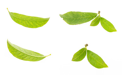 Green leaf collection, isolated on white background.