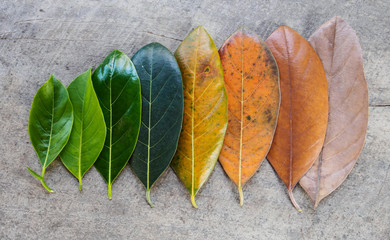 Top view multi color leaf on wood background, period time of leave