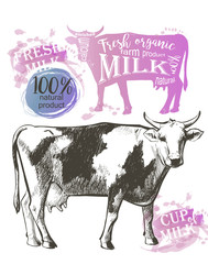 Cow vintage graphic