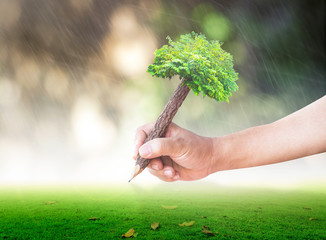 World environment day concept: Human hands holding pencil tree over blurred nature background