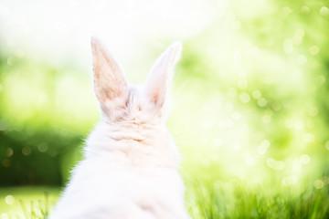 Hase von Hinten in Natur Ostern