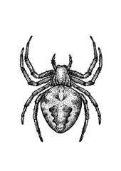 engraved, drawn,  illustration, insect, spider, garden orb