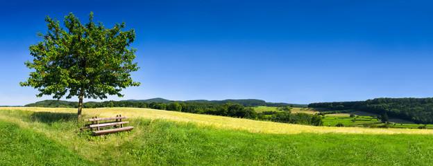Foto auf Leinwand Wiesen / Sumpfe Grüne Landschaft im Sommer als Hintergrund