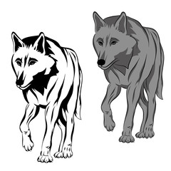 adult wolf is realistic vector illustration black silhouette set