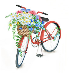 Watercolor hand drawn red bicycle with beautiful flower basket. Illustration isolated on white background