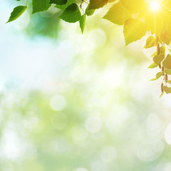 Afternoon cast, abstract summer backgrounds with green leaves an