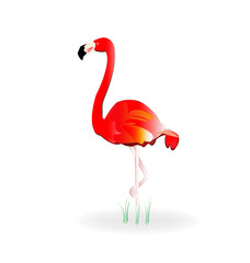 Flamingo icon logo vector image