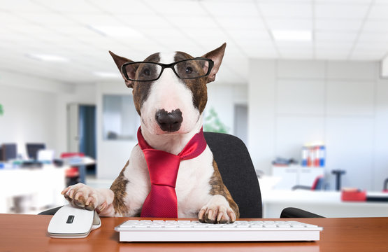 Business dog at work