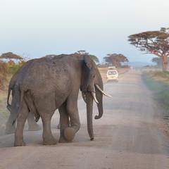 Family of elephants on dirt roadi in Amboseli national park, Kenya.