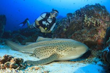 Scuba diver and Leopard Shark