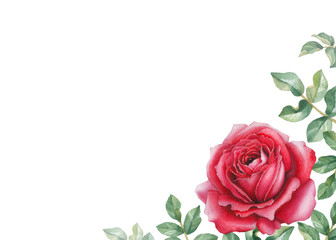 Watercolor illustration of a rose flower