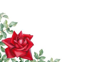 Watercolor illustration of a rose flower. Perfect for greeting c