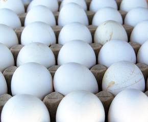 organic eggs in egg box