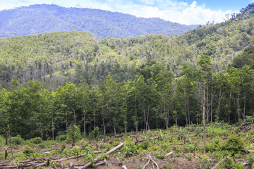 Deforestation. Rainforest is cleared for palm oil industry. Borneo, Malaysia