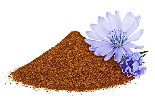 Blue chicory flower and powder of instant chicory isolated on a