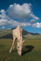 Portrait of white horse and bue sky