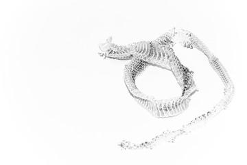 Snake shedding skin isolated on white background - Rattlesnake Skin with copy space.