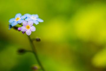 Closeup of small wildflower