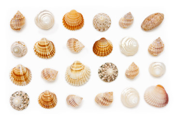 composition of exotic sea shells on a white background.