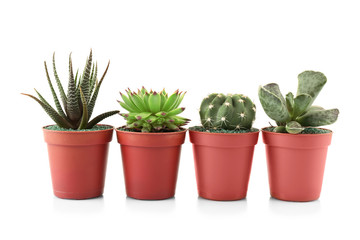 Different succulents and cactus in pots on white background
