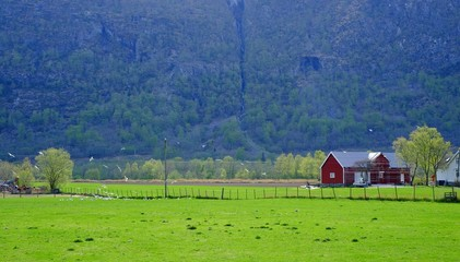 Red house in a field