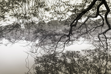 Reflections of tree branches.
