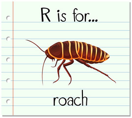 Flashcard letter R is for roach