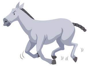 Gray horse running on white