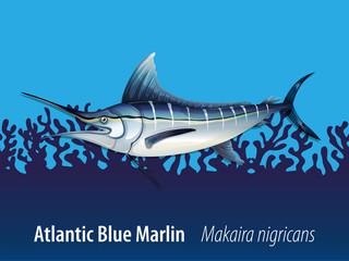 Atlantic blue marlin under the sea