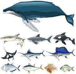 Set of fish in the ocean