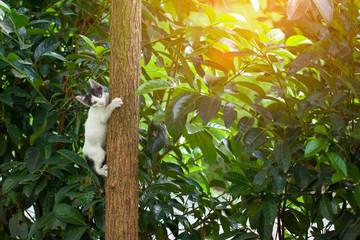 playful kitten climbing tree
