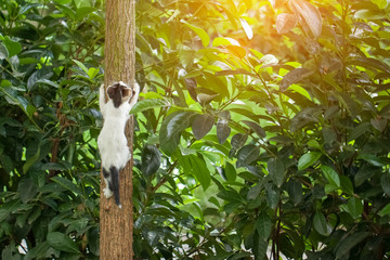 playful kitten climbing tree