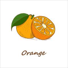 Oranges, hand-drawn. Vector illustration.