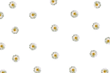 Pattern with chamomile on white background. Flat lay, top view