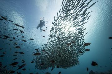 Unterwasser - Riff - Fisch - Fischschwarm - Taucher - Tauchen - Curacao - Karibik