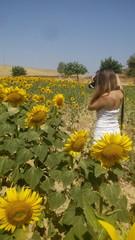 Mujer joven fotografiando girasoles