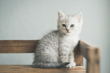 Cute kitten lying