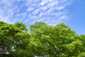 Green Tree with clouds in the sky
