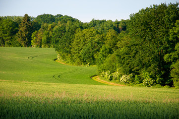 Beautiful fields of grain surrounded by forest