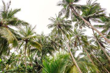 Beautiful landscape, tropical palm beach