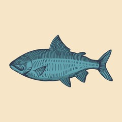 sea fish blue. vector